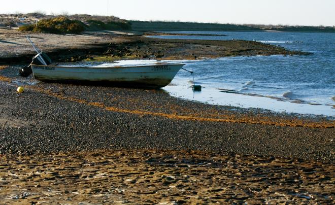 Laguna de San Ignacio B.C.S.