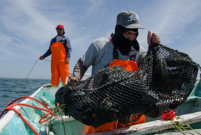 Los ecosistemas costeros y marinos, la vida silvestre y la forma de vida de las comunidades pesqueras se ve amenazada por la presencia de la mina submarina Don Diego. Foto: Miguel Angel de la Cueva/COSTASALVAJE