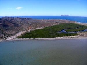 Manglares en Isla Magdalena, Bahía Magdalena, Baja California Sur.
