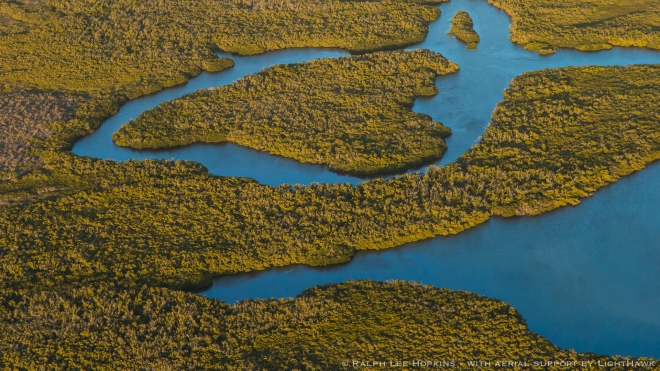 Mangrove Wetlands, Tidal Channels, Magdalena Bay, Baja California, Mexico