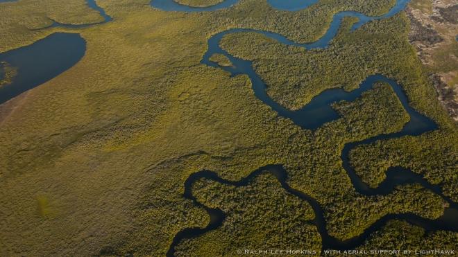 Bahía Magdalena posee 24,000 ha de bosques de manglar atravesados por canales aptos para navegar.