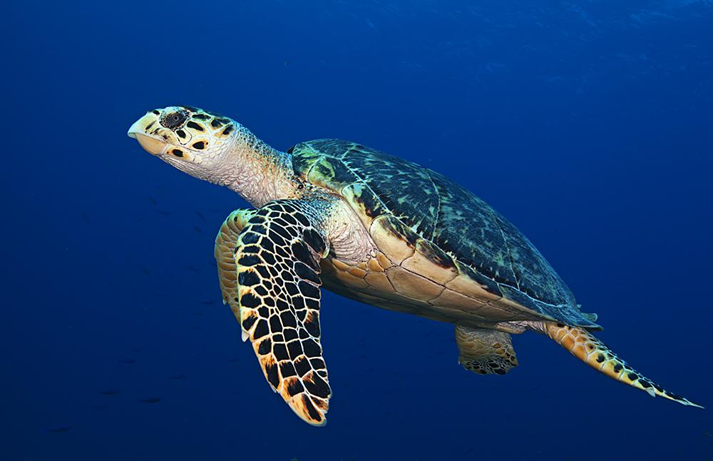 ¡Feliz Día Mundial De Las Tortugas (marinas)!