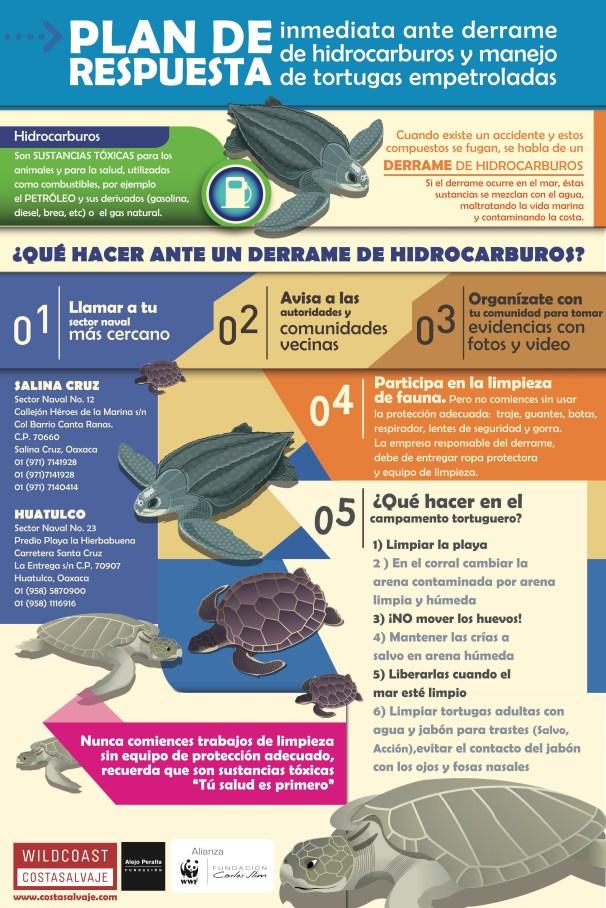 Infograma tortugas empetroladas (1)