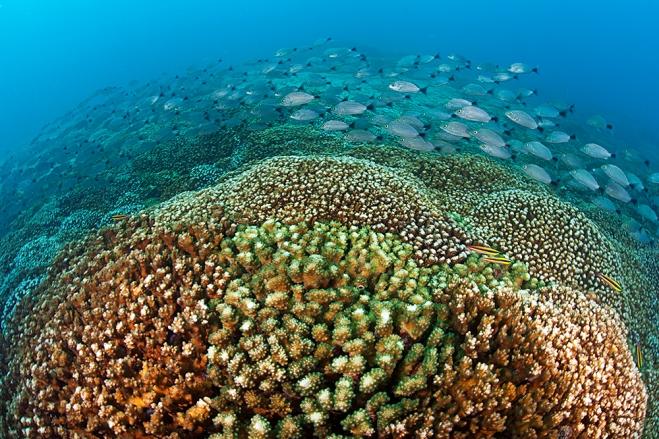 Arrecife de coral del Parque Nacional Huatulco. Foto Claudio Contretas Koob